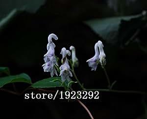 semillas CALIENTE cisne Flores 100PCS características chinas semillas de flores raras flores blancas Plantación de envío gratuito Inicio Jardín