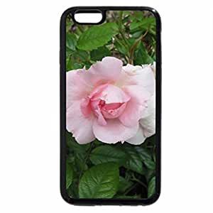 iPhone 6S Plus Case, iPhone 6 Plus Case, Flowers on a walking day 02