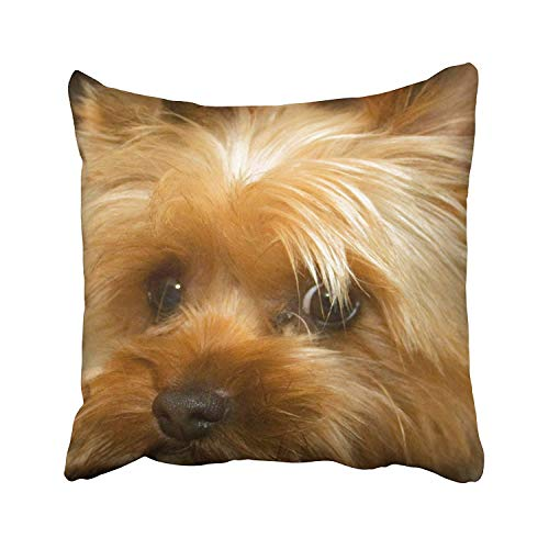(GETTOGET Love Haley Dog Yorkie Terrier Portrait Pillow Cases Comfortable Throw Pillow Cover for Sofa Home Room Bed 18x18 in)