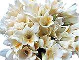 10 Heirloom, Antique Freesias Bulbs - Very Fragrant and Easy to Grow