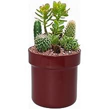 SafeInside 4202 Flower Pot Diversion Safe with Key Lock, Marsala