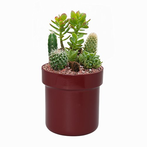 SafeInside 4202 Flower Pot Diversion Safe, Marsala, 0.03 Cubic feet