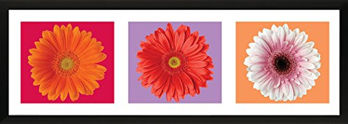 Culturenik Gebera Daisies Trio Floral Flowers Decorative Photography Print (Framed 12x36 Poster) ()