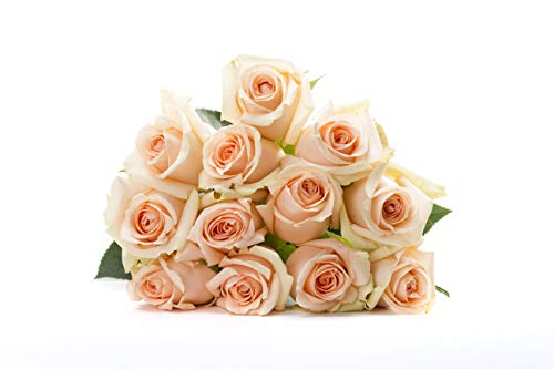 Martha Stewart Roses by BloomsyBox - One Dozen Peach Alejandra Roses Selected by Martha and Hand-Tied, Long Vase Life