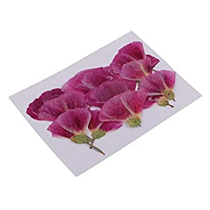 Fenteer 12 Pack Natural Press Godetia Pressed Real Dried Flower for DIY Crafts Bookmarks Scrapbooking Card Making Clear Silicone Phone Case Decorations 11