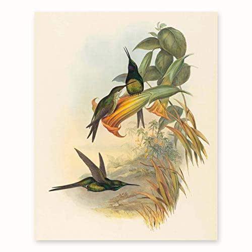 Amazon.com: Hummingbird Art Print, Botanical Bird
