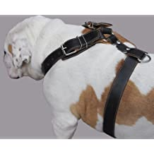 "Black Genuine Leather Dog Harness. 28""-34"" Chest, 1.5"" Wide Straps, Rottweiler, Bulldog"