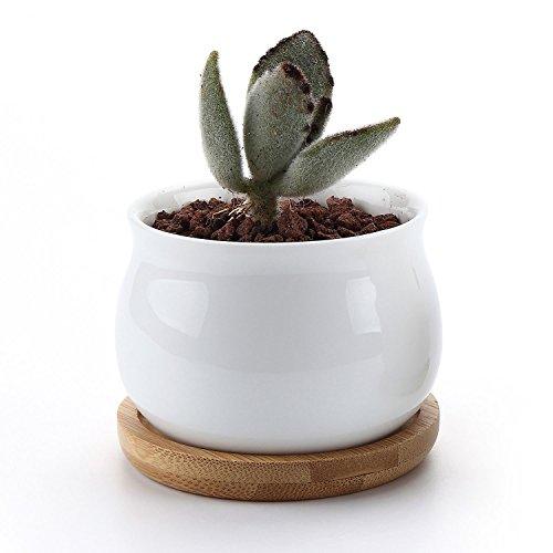 T4U Ceramic succulent Container Planter