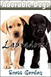 Adorable Dogs: Labradors (Heartwarming!)