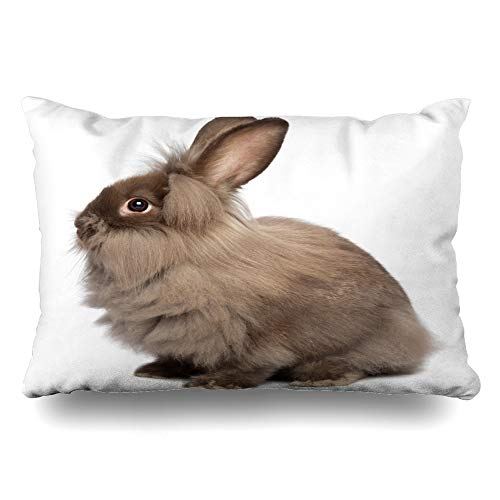 Ahawoso Throw Pillow Cover King 20x36 Domestic Brown Rabbit Sitting Chocolate Colored Mini Lionhead Fur Bunny Holidays Cute White Young Zippered Cushion Pillow Case Home Decor Pillowcase