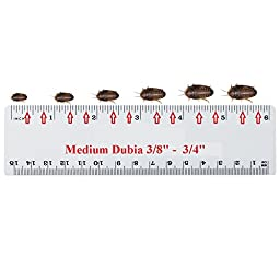 Live Dubia Roaches for Feeding Reptiles (200, Medium Mix 1/2\