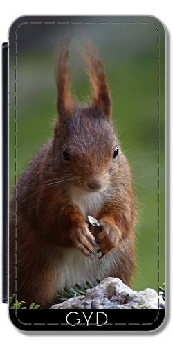 Leder Flip Case Tasche Hülle für Apple Iphone 7 / Iphone 8 - Eichhörnchen Tier Wald Tier by WonderfulDreamPicture