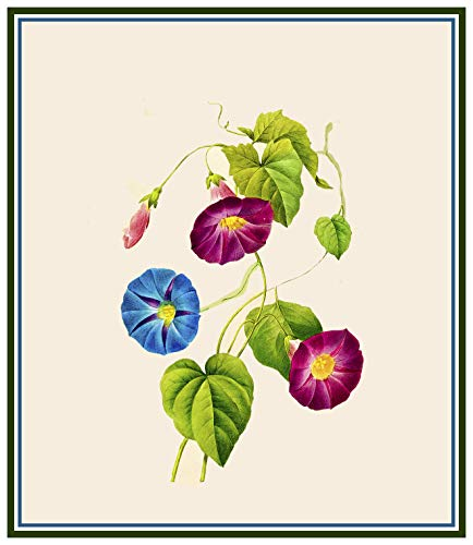 - Orenco Originals Redoute's Morning Glory Flowers Counted Cross Stitch Pattern