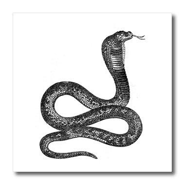 3dRose ht_37375_3 Black and White Vintage Cobra Snake Iron on Heat Transfer, 10 by 10