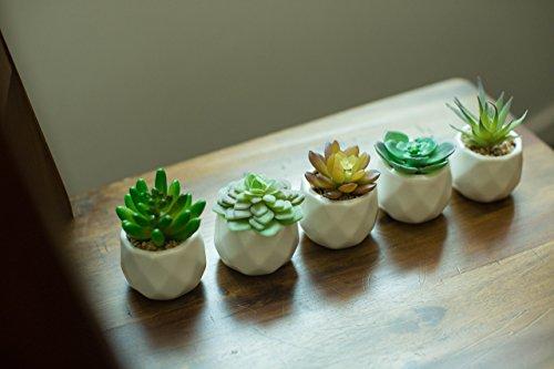 Assorted Succulent Plants Faux Succulent Decor Fake Cactus in Modern Geometric White Planter 5 piece set