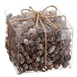 Assorted Pinecones Whitewashed In Acetate Gift Box 6 Inches x 6 Inches x 5 Inches