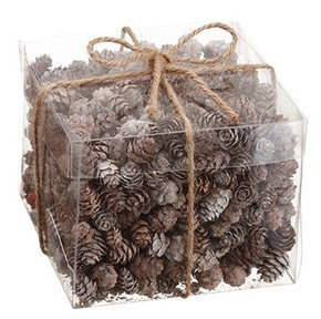 Assorted Pinecones Whitewashed In Acetate Gift Box 6 Inches x 6 Inches x 5 Inches (Pine Cone Vase)