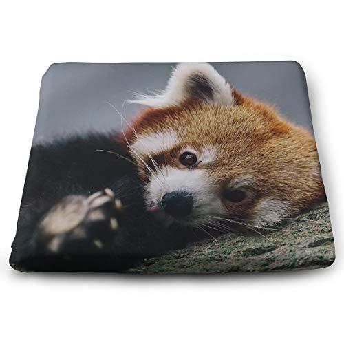 (Comfortable Seat Cushion Chair Pad Cute Red Panda Perfect Memory Foam Cushions Lighten The)