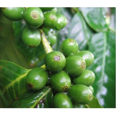 Pure Green Coffee Bean Extract Max ~ Strongest Diet Pill ~ 910mg Weight Loss Formula ~ Green Coffee Bean Extract 800mg ~ 100mg Raspberry Ketones ~ Downloadable FOOD JOURNAL Included ~ Contains up to 45% to 50% Chlorogenic Acid ~ 3 Month Supply by Diet Health Solutions (Image #4)