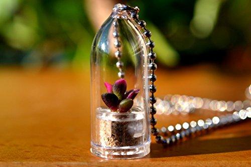 Sunrise Succulent Plant Necklace Terrarium
