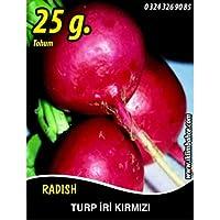 Turp Tohumu Toros Kırmızısı - 25g (~ Takribi 2250 Tohum)
