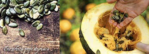 Wilderness Poets Oregon Grown Pumpkin Seeds - Organic, Raw, Heirloom (25 Pound) by Wilderness Poets (Image #3)