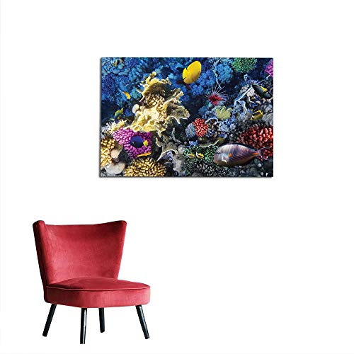kungfu Decoration Art Stickers Ocean,Colorful Coral Reef and Fishes Colony in Red Sea Egypt Africa Underwater Life Image,Multicolor Art Poster W27.5 x L19.7 ()
