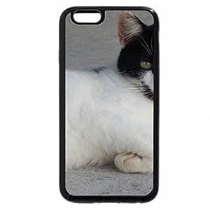 iPhone 6S / iPhone 6 Case (Black) Cat Lying