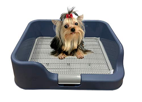 DogCharge-Indoor-Dog-Potty-Tray--with-Protection-Wall-Every-Side-for-No-Leak-Spill-Accident-Keep-Paws-Dry-and-Floors-Clean