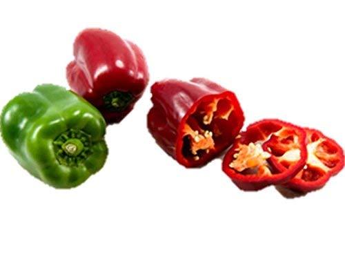 (California Wonder Bell Pepper Seed Heirloom Save Bulk Green Red #61 (200 Seeds) )