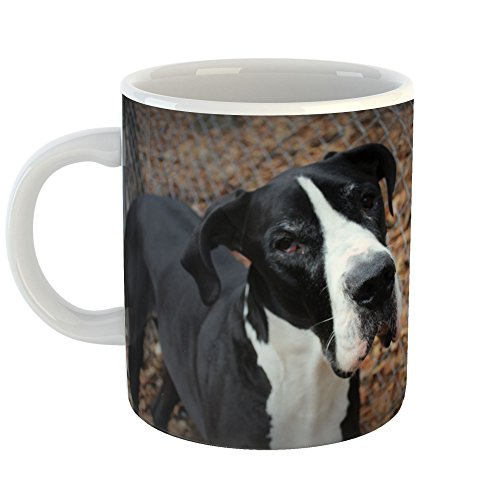 Hound Dog Sweet Tea - Westlake Art - Dog Breed - 11oz Coffee Cup Mug - Modern Picture Photography Artwork Home Office Birthday Gift - 11 Ounce (3BC9-AC538)
