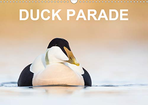 Duck Parade 2020: Excellent photographs of 12 duck species (Calvendo Animals) ()