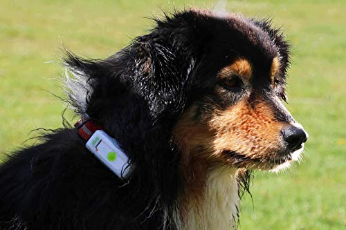 Weenect Dogs - The GPS tracker for Dogs 5