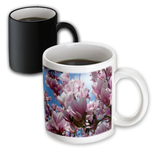 3dRose Lee Hiller Hot Springs National Park Flowers - Springs Flowers Saucer Magnolias - 11oz Magic Transforming Mug (mug_7600_3)