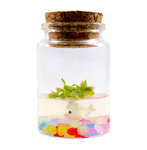 Sundew Terrarium - Self Grow - Drosera spatulata - 3'' Jar by Bloomify (Image #4)