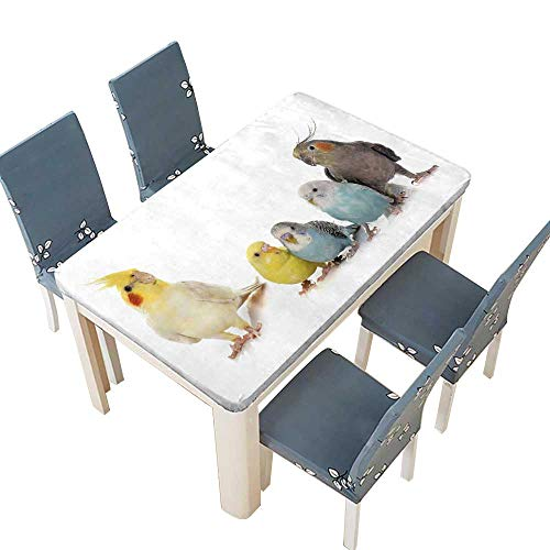 PINAFORE Decorative Tablecloth Common pet Parakeet and Cockatielin Front of White Background Washable for Tablecloth W33.5 x L73 INCH (Elastic Edge)