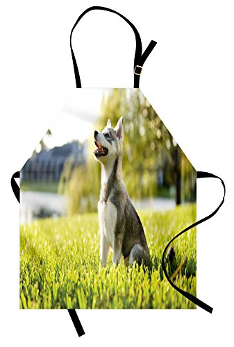 Ambesonne Alaskan Malamute Apron, Klee Kai Puppy Sitting on Grass Looking up Friendly Young Animal, Unisex Kitchen Bib Apron with Adjustable Neck for Cooking Baking Gardening, Multicolor 1
