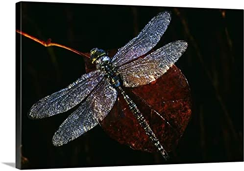 High Angle View of Blue Darner Dragonfly on Leaf