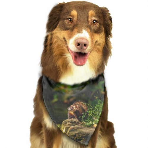 Cecil Beard Green Ferrets Fun Bright Color Snap-On Pet Dog Bandana Triangle Scarf Bibs - Accessories for Dogs, Puppy, Cats - Small/Medium, Soft Polyester Bandanas
