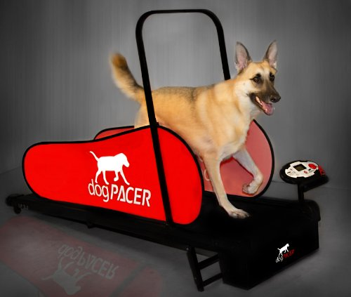 dogPACER LF 3.1 Full