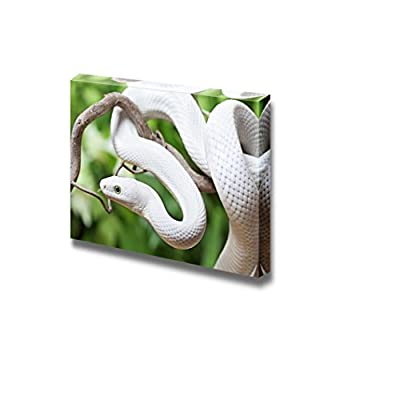 Texas Rat Snake Photography - Canvas Art