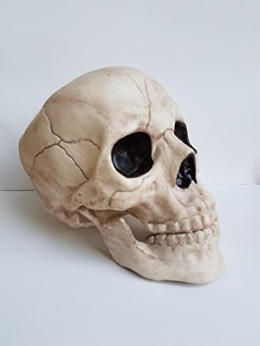 (Gloom for Your Room 8 Inch Skeleton Bones Skull with Movable Jaw)