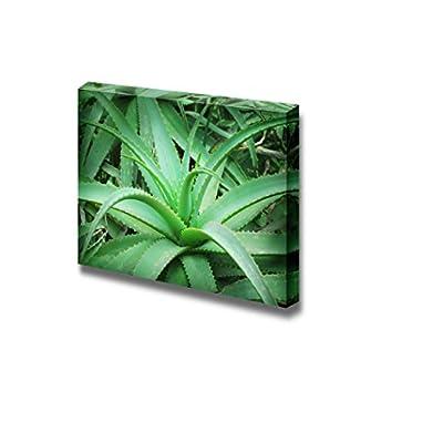 Canvas Prints Wall Art - Closeup Photo of Green Plant Aloe Vera | Modern Wall Decor/Home Art Gallery Wraps Giclee Print & Wood Framed. Ready to Hang - 12