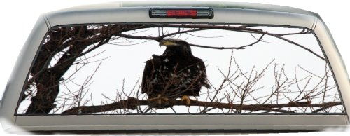 bald eagle window tint - 4