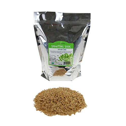 (Organic Non-GMO Whole Oat Grain Seeds (With Husk Intact)- 2 Lb Re-Sealable Pouch- Oats Seed Grains, for Sprouting, Oat Grass, Animal Feed, Storage & More)