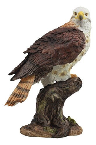 Ebros Realistic Wildlife Red Tailed Hawk Perching On Tree Stump Statue Birds Of Prey Decorative Figurine 10