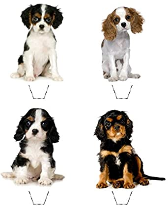 Novelty Cavalier King Charles Spaniel Puppy Mix 12 Edible Stand Up