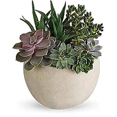 Desert Beauty Succulent Garden : Garden & Outdoor