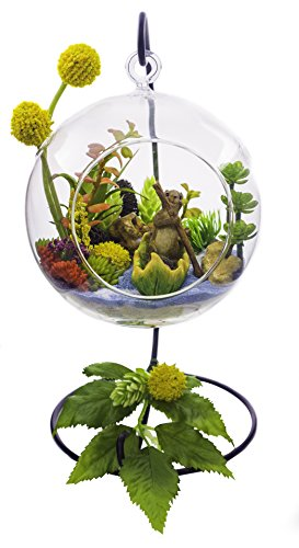 "Terrarium Kit | The Acorn Captain | Squirrel in Boat | Complete Terrarium Gift Set with Stand | 6"" Glass Globe Terrarium Container 