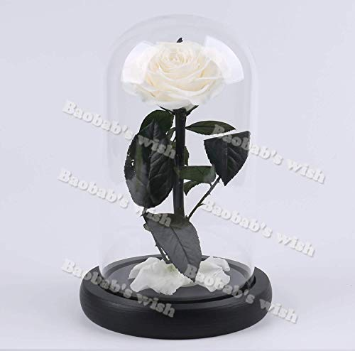 Preserved Fresh Flower,Enchanted Rose,Natural Eternal Life Rose in Glass Dome Cover with Gift Box for Valentine's Day, Mother's Day, Anniversary, Birthday, wedding (white)